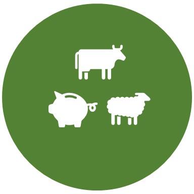 cow pig sheep