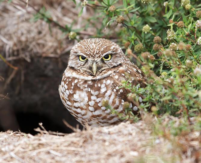 owl cam